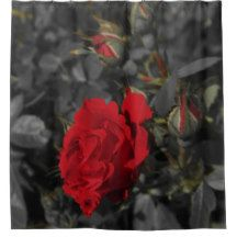 Red Roses Bloom Scroll On Dark Gray Shower Curtain