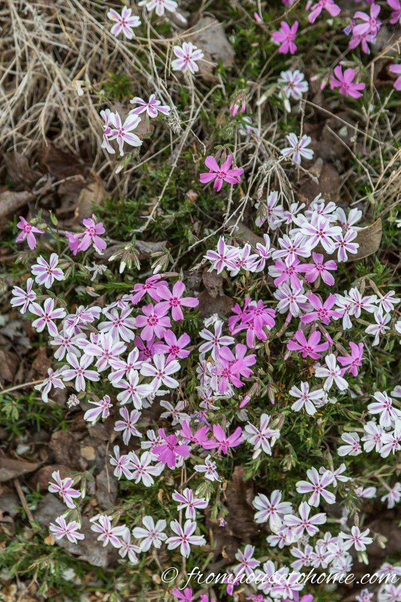 Full Sun Perennials 10 Beautiful Low Maintenance Plants That Thrive