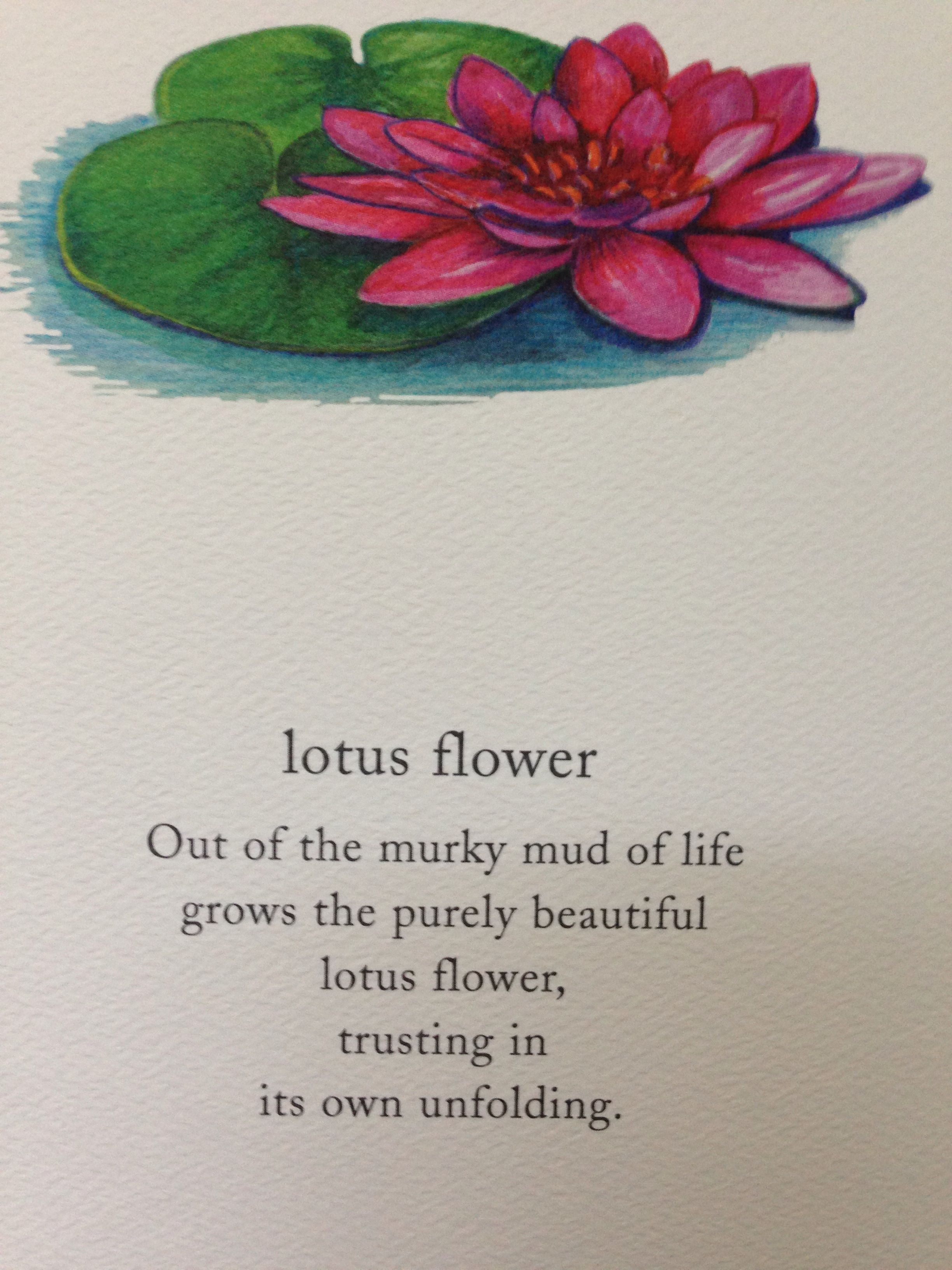 Trust Spirit And Soul 1 Pinterest Water Lilies And Trust