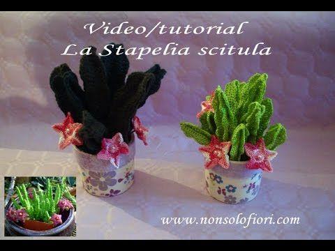 3 stapelia scitula all 39 uncinetto pianta grassa for Piante grasse uncinetto