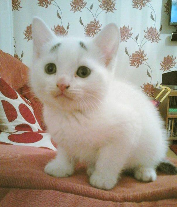 8 Week Old Kitten Born With Permanently Worried Looking Eyebrows