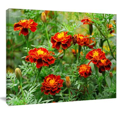 """DesignArt 'Blooming Red Marigold Flowers' Photographic Print on Wrapped Canvas Size: 30"""" H x 40"""" W x 1"""" D"""