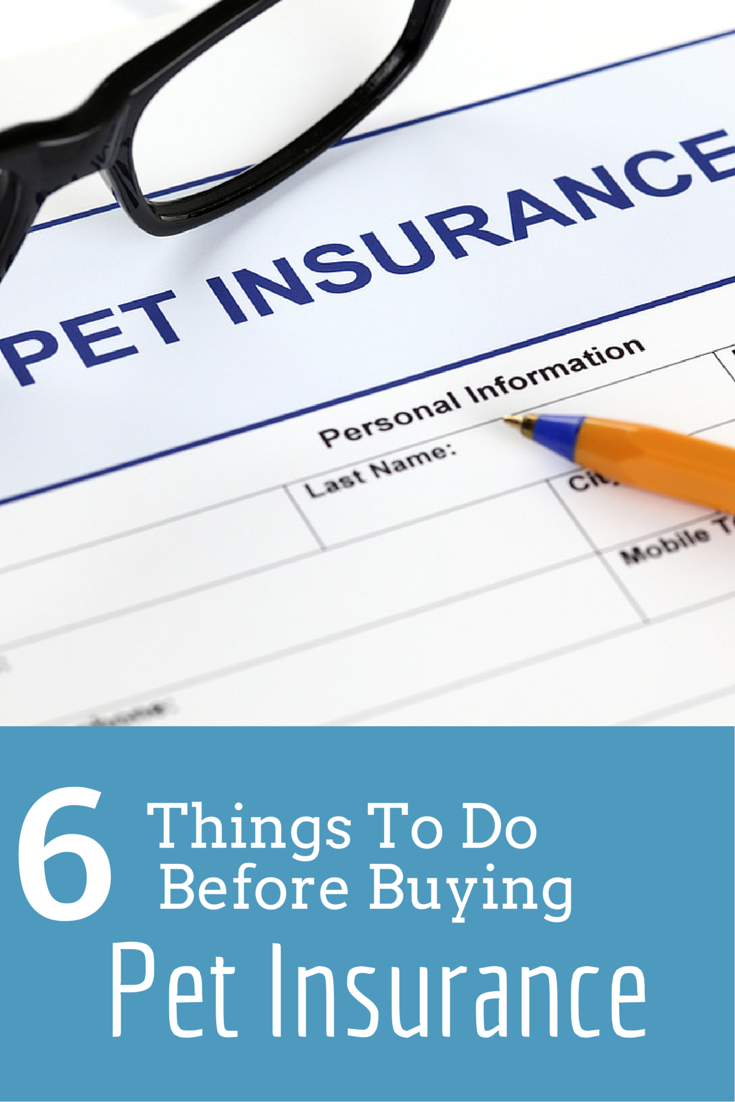 Six Things To Do Before You Buy A Pet Insurance Plan Pet Insurance Pet Insurance Dogs Pet Health Insurance