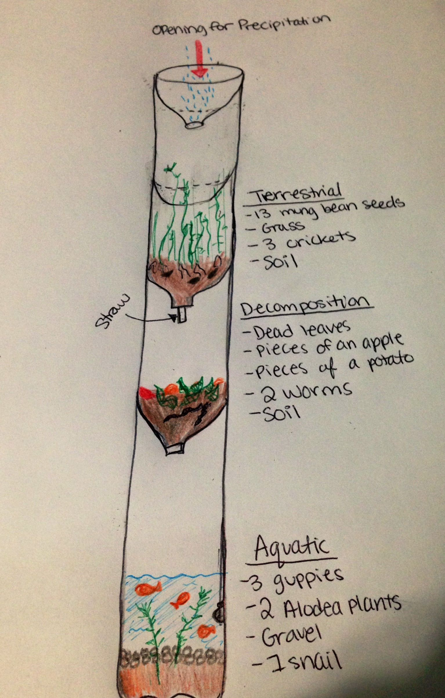 Water Ecosystem Diagram Fireplace Components Ecocolumn: Anchor Charts | Biomes, Ecosystems & Habitats: Teaching Science Projects, I ...