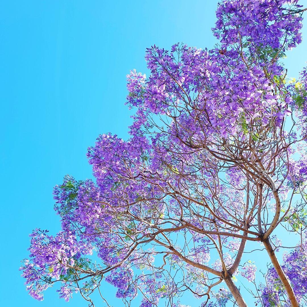 Love the colour....