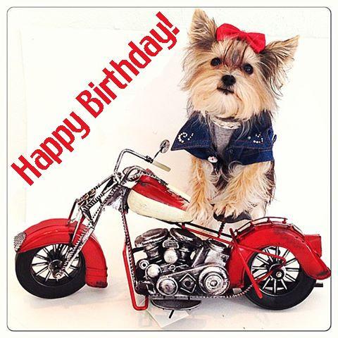 Happy Birthday Motorcycle Dog Happy Birthday Motorcycle Happy