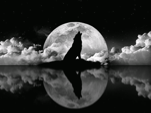 Wolves Photo Wolves Wolf Photos Wolf Wallpaper Wolf Howling