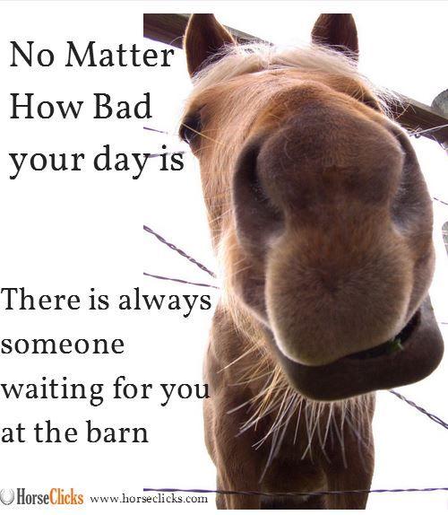 Always remember! #Funny #Horse #Meme | Horse Humor ...
