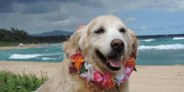 Thought Hawaii Couldn T Get Better Now You Can Borrow A Shelter Dog In Paradise Shelter Dogs Dog Friendly Stores Dog Friends