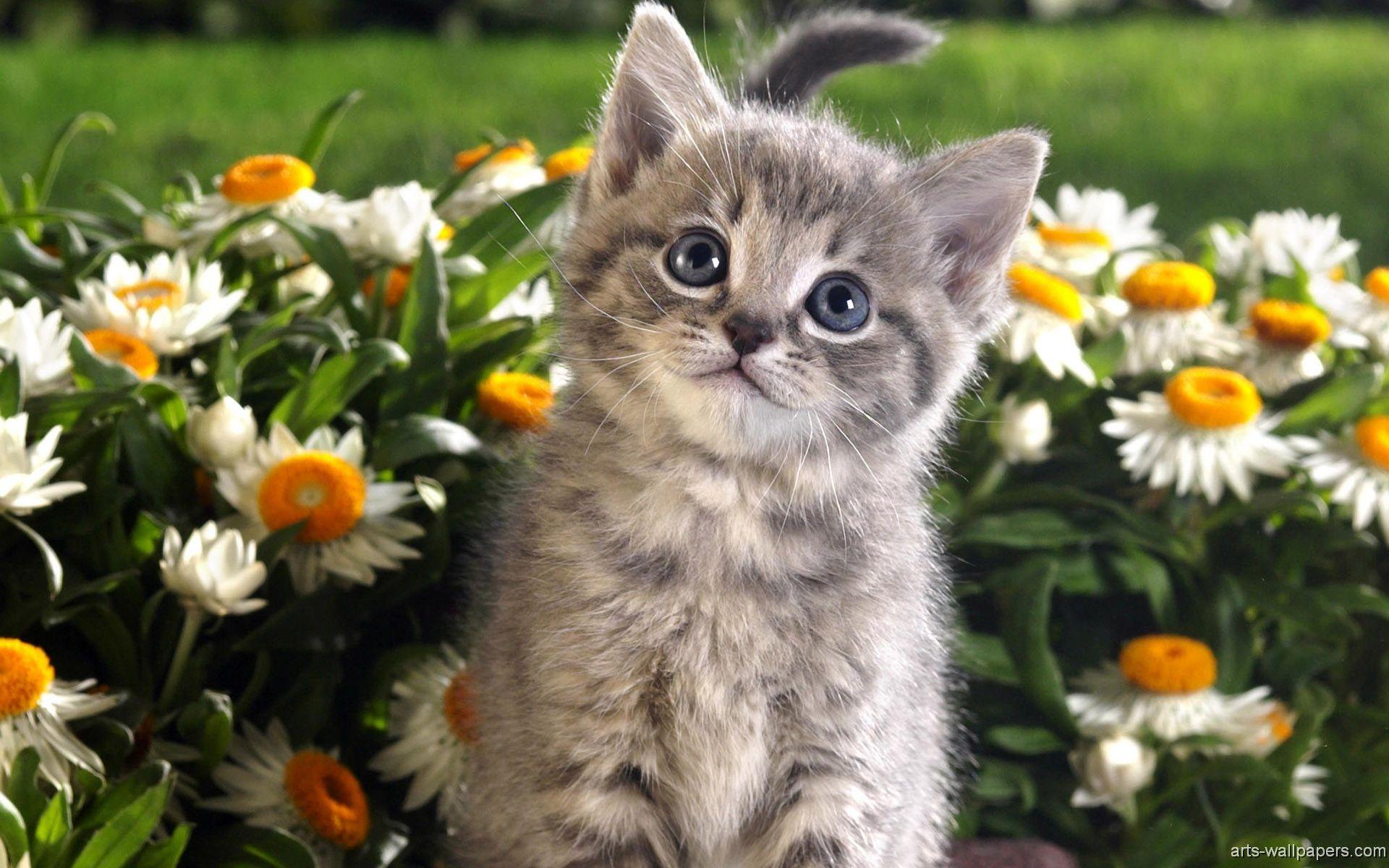 Kitten Wallpapers Kittens Cutest Kitten Wallpaper Spring Animals