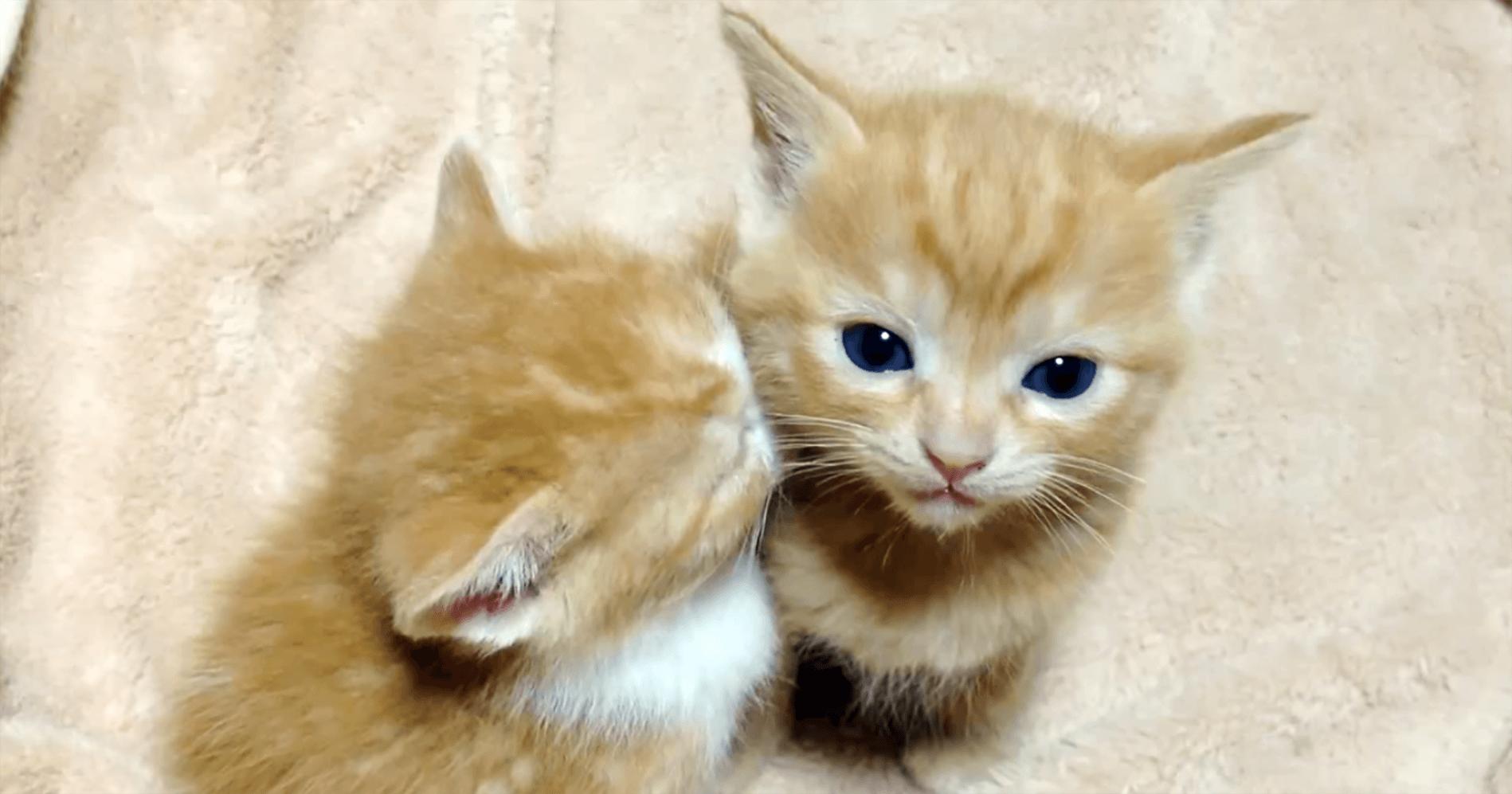 究極の癒し 隣の子に顔をうずめて眠っちゃった子猫 Curazy クレイジー 子猫 キュートな猫 猫 子猫