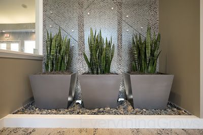 Everything Grows Groups Of Three Modern Style Homes Interior Plants Indoor Plants