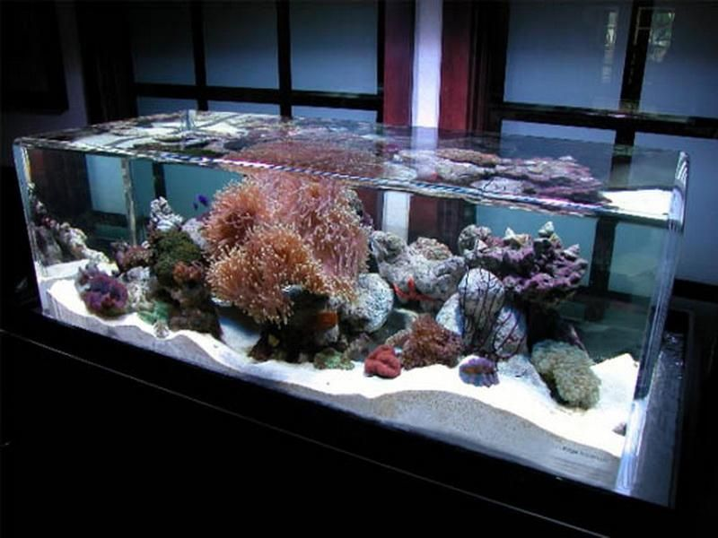 Zeroedge Fish Tank Decoration Ideas