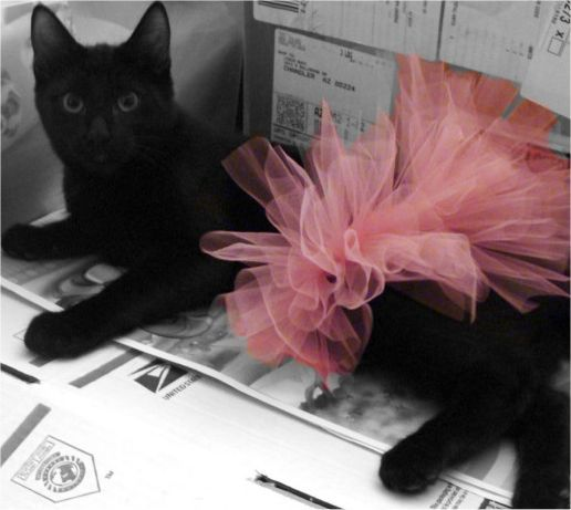 10 Cats In Tutus! | Cute Pictures and Videos