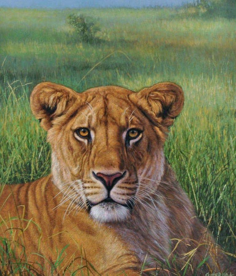 Pinturas De Leones Y Gatos Leon Pintado Pintura De Leon