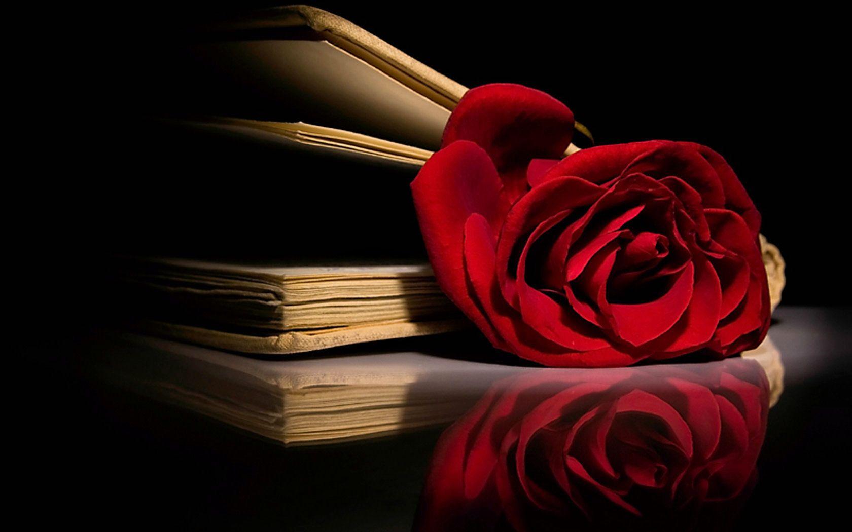 Amo rosas vermelha.