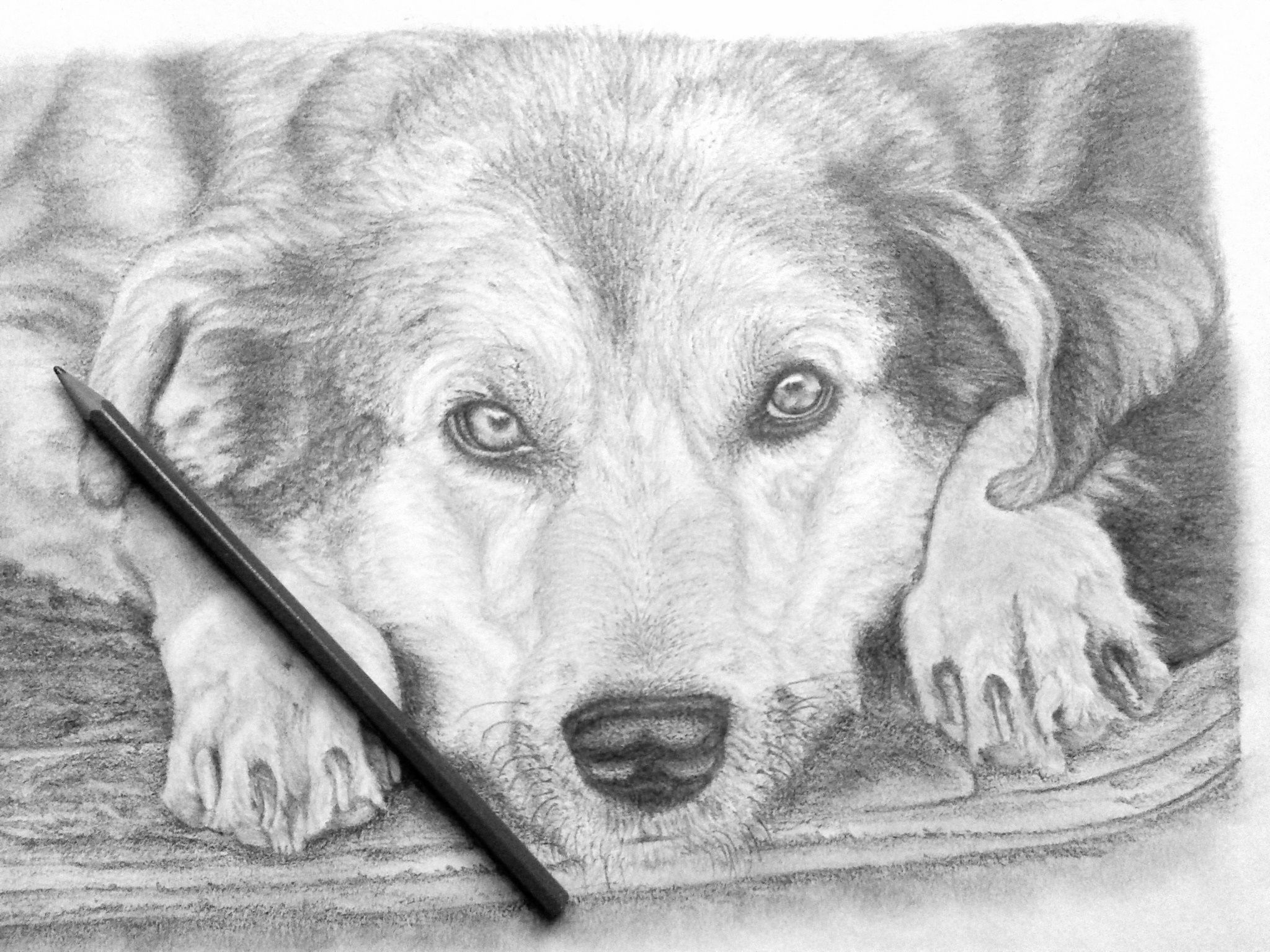 Pencil Sketch Dog Drawings Copy 2
