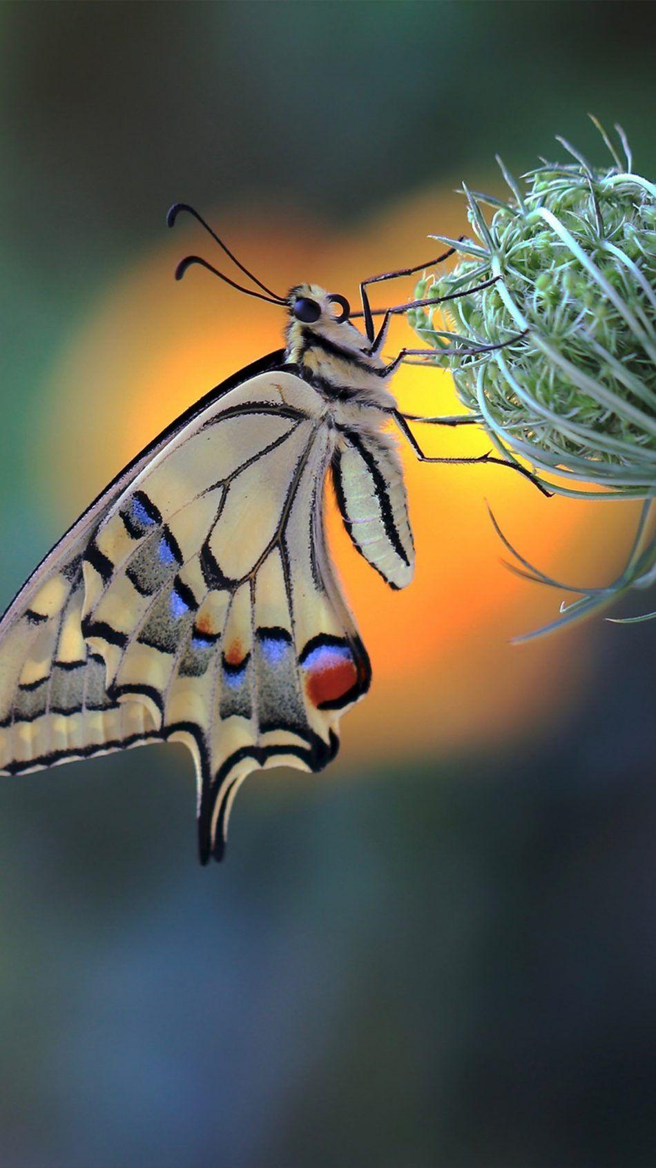 Butterfly Insect Flower Macro 4k Ultra Hd Mobile Wallpaper Insects Beautiful Butterflies Butterfly