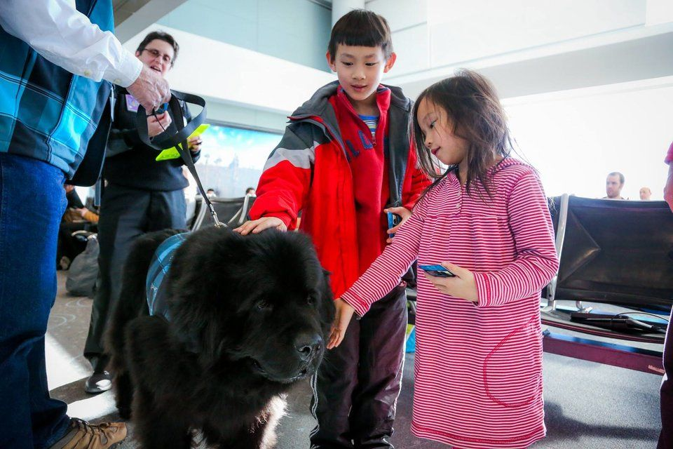 United just banned 'emotional support animals' on long