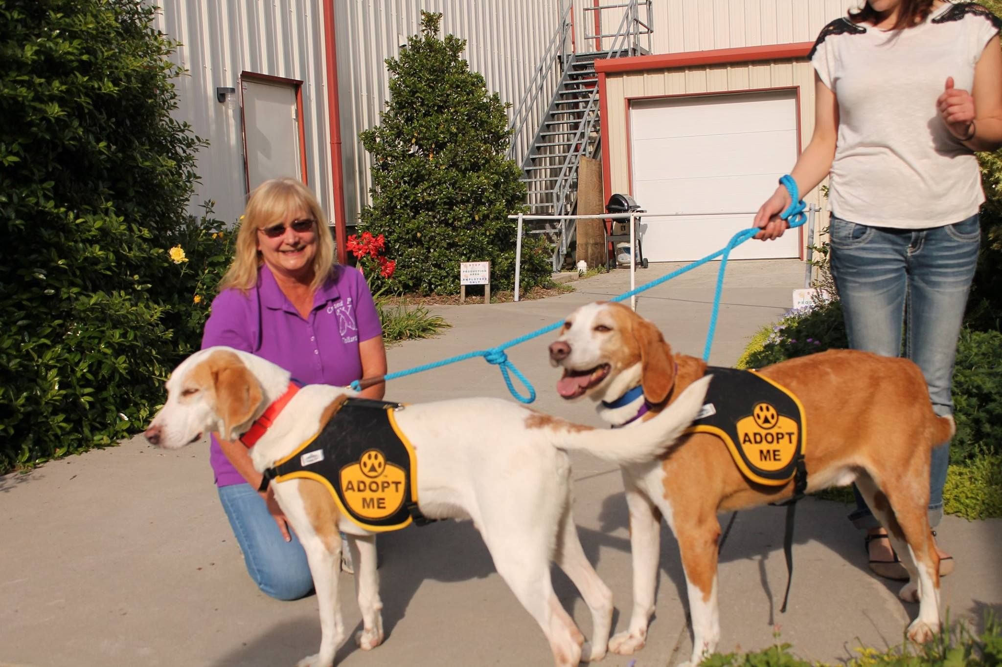 Thank you Crossed Paws for making sure all of our dogs have collars! YOU make the world a better place!