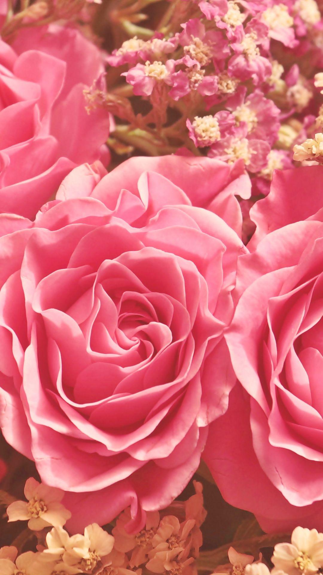 Close up, pink roses, bloom wallpaper Bloom, Blooming