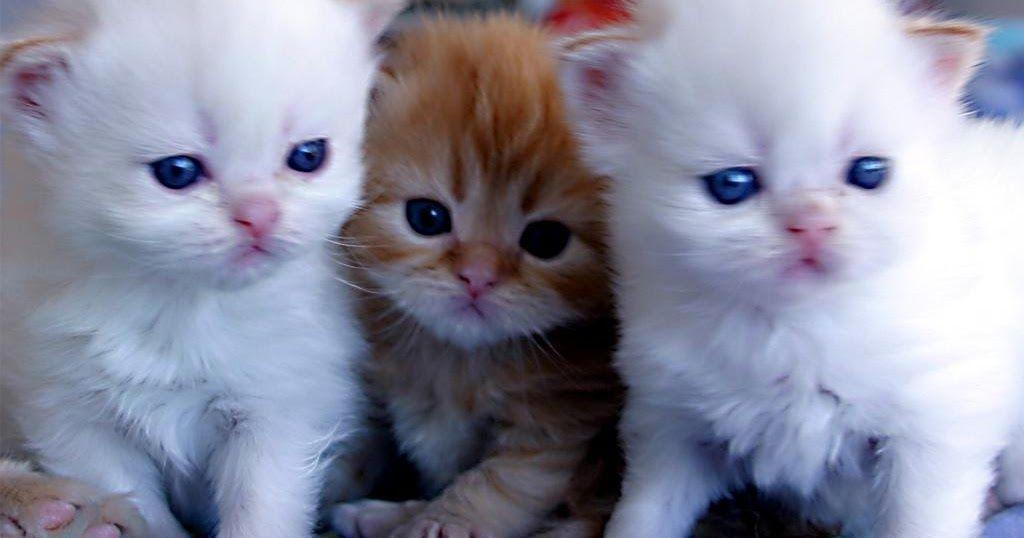 احلى صور عرض خلفيات للعرض رائعة نعرضها لكم عبر موقعنا أحلي صورة مع افضل كولكشن صور و خلفيات بتصاميم حديثة و غير عادية تناسب العر Kittens Cutest Cats Cute Cats