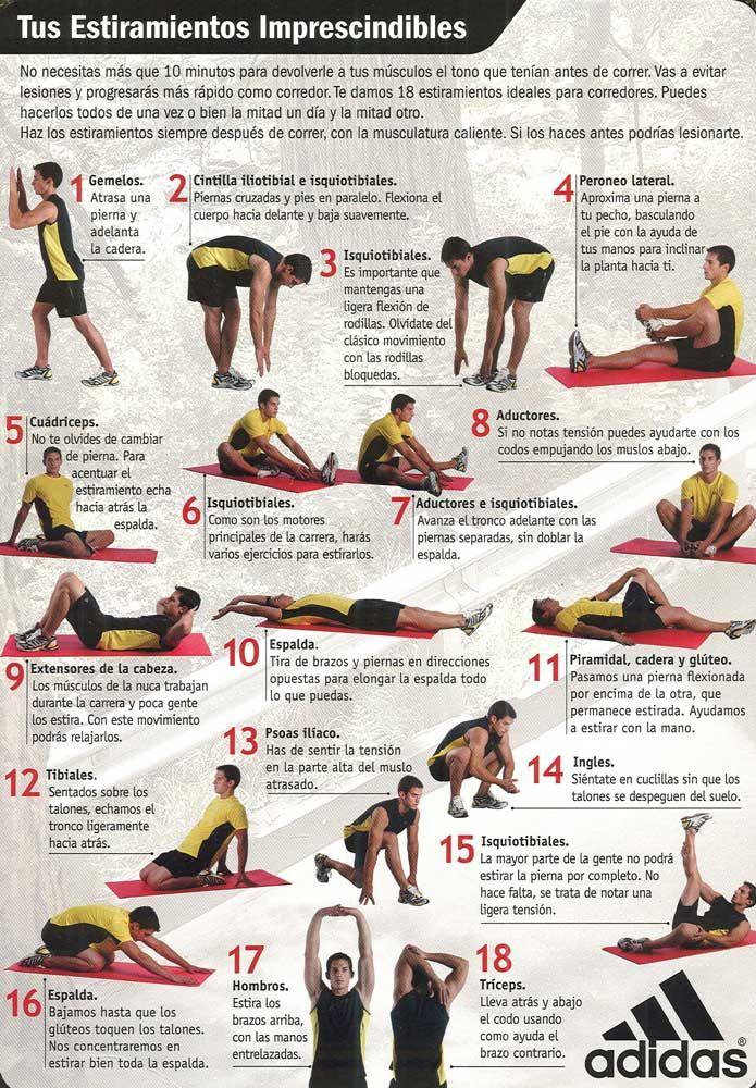 ejercicios estiramiento todo el cuerpo