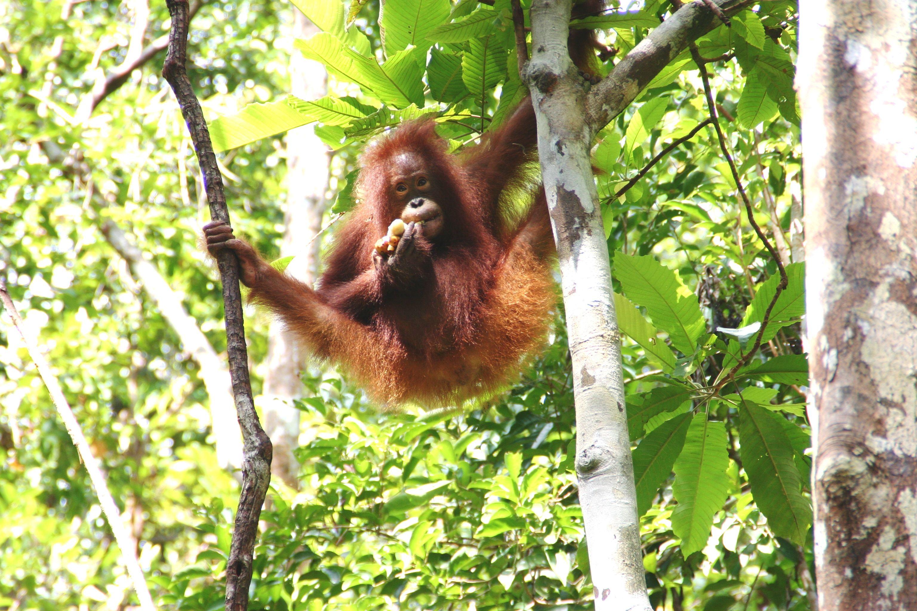 Tropical Rainforest Animals And Plants Pic Tropical Rainforest