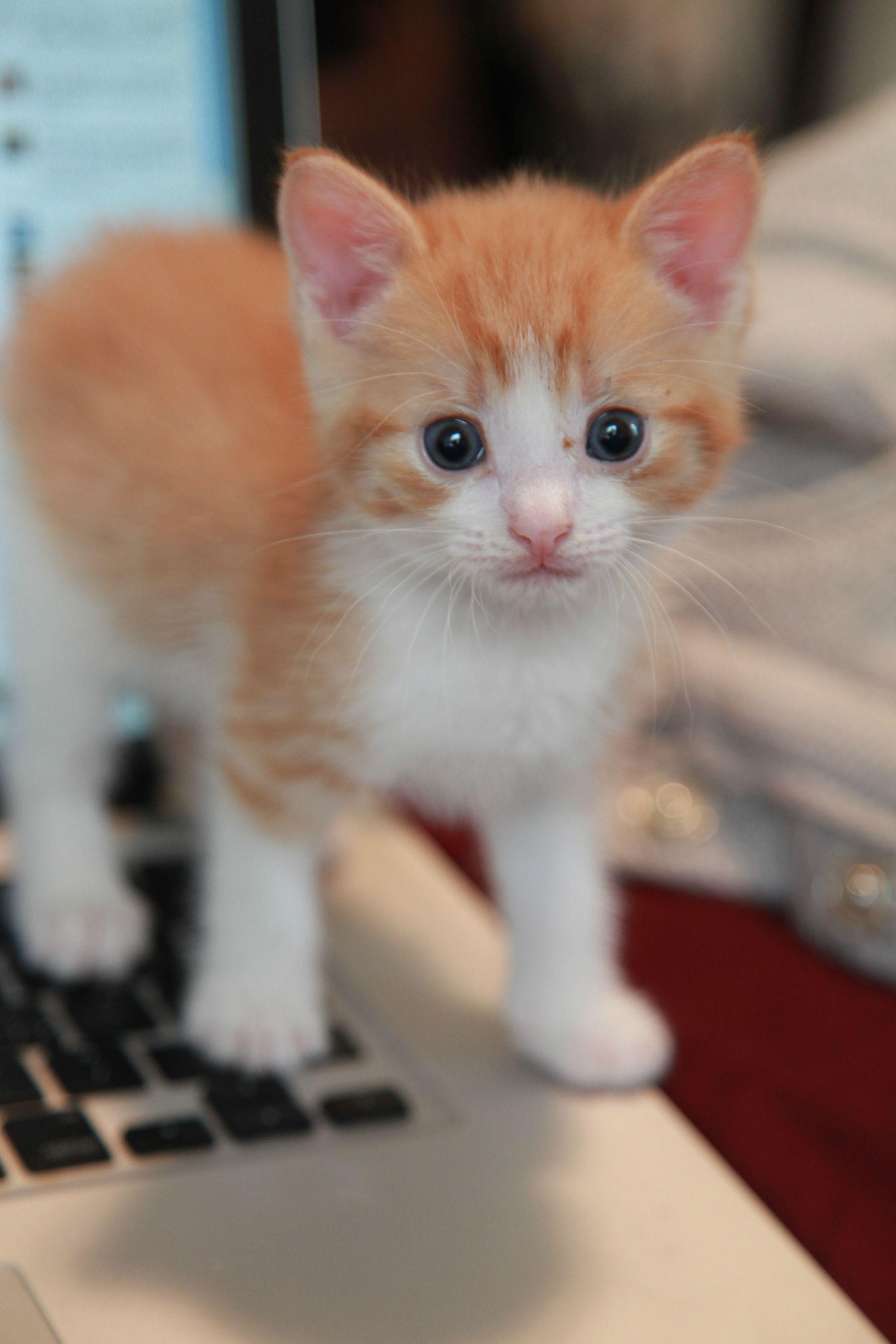 Pin By Jangmi S Universe On My Dreamy Kitten Kittens Cutest Cats Cute Cats
