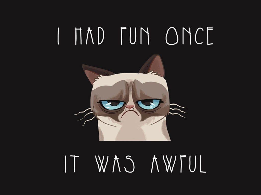 pas de chance !_Grumpy cat