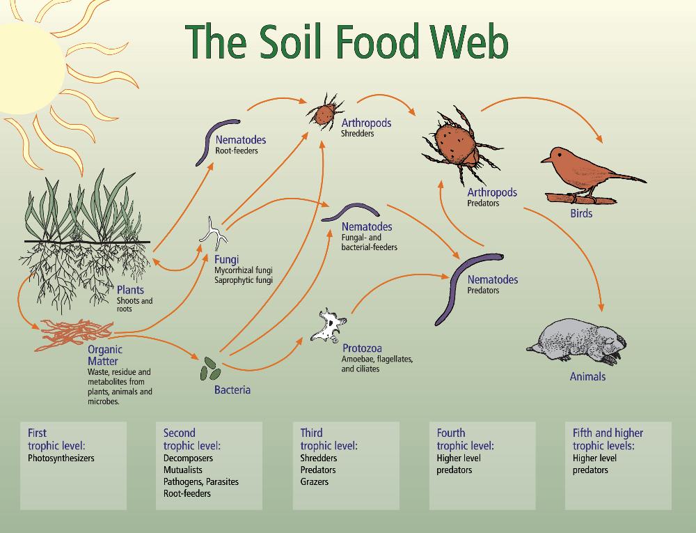 USDA NRCS Natural Resources Conservation Service Food