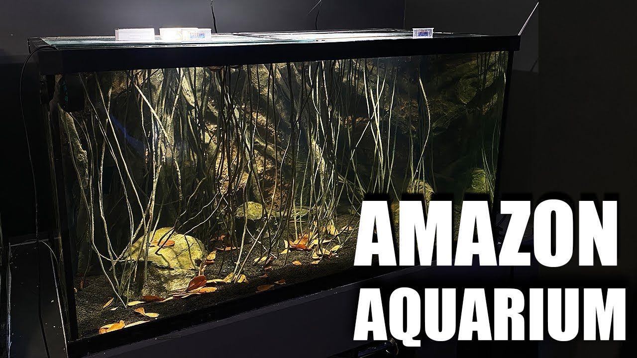 Aquariums How I Made This Aquarium In 2020 Aquarium Diy Aquarium Aquarium Backgrounds
