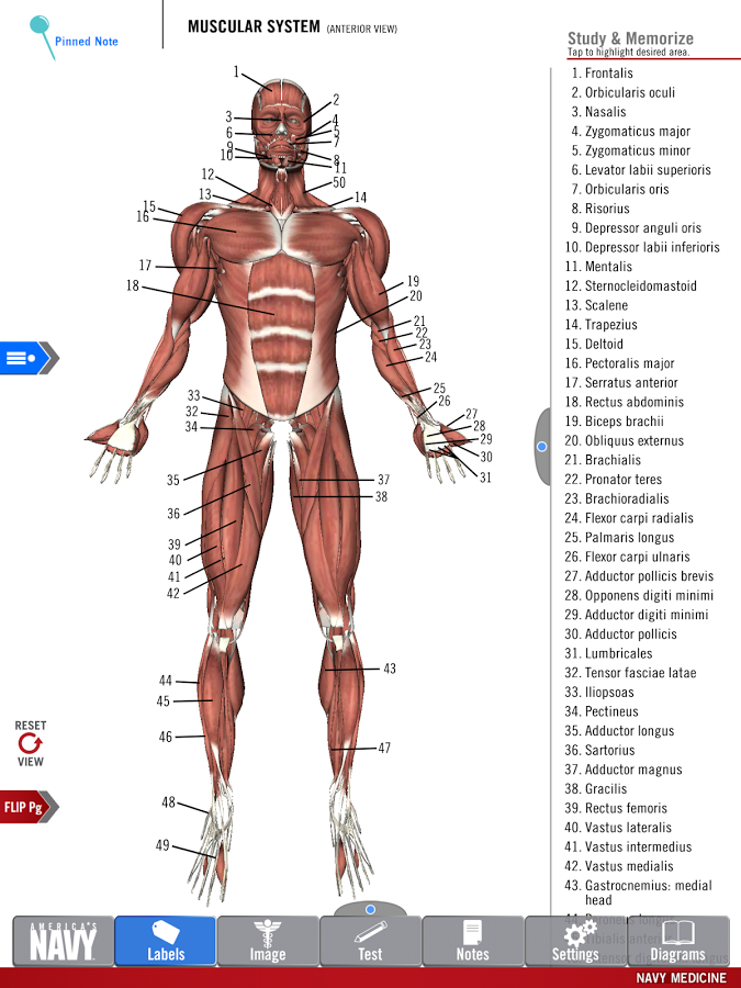 Anatomy Study Guide: captura de pantalla   Anatomía   Pinterest ...