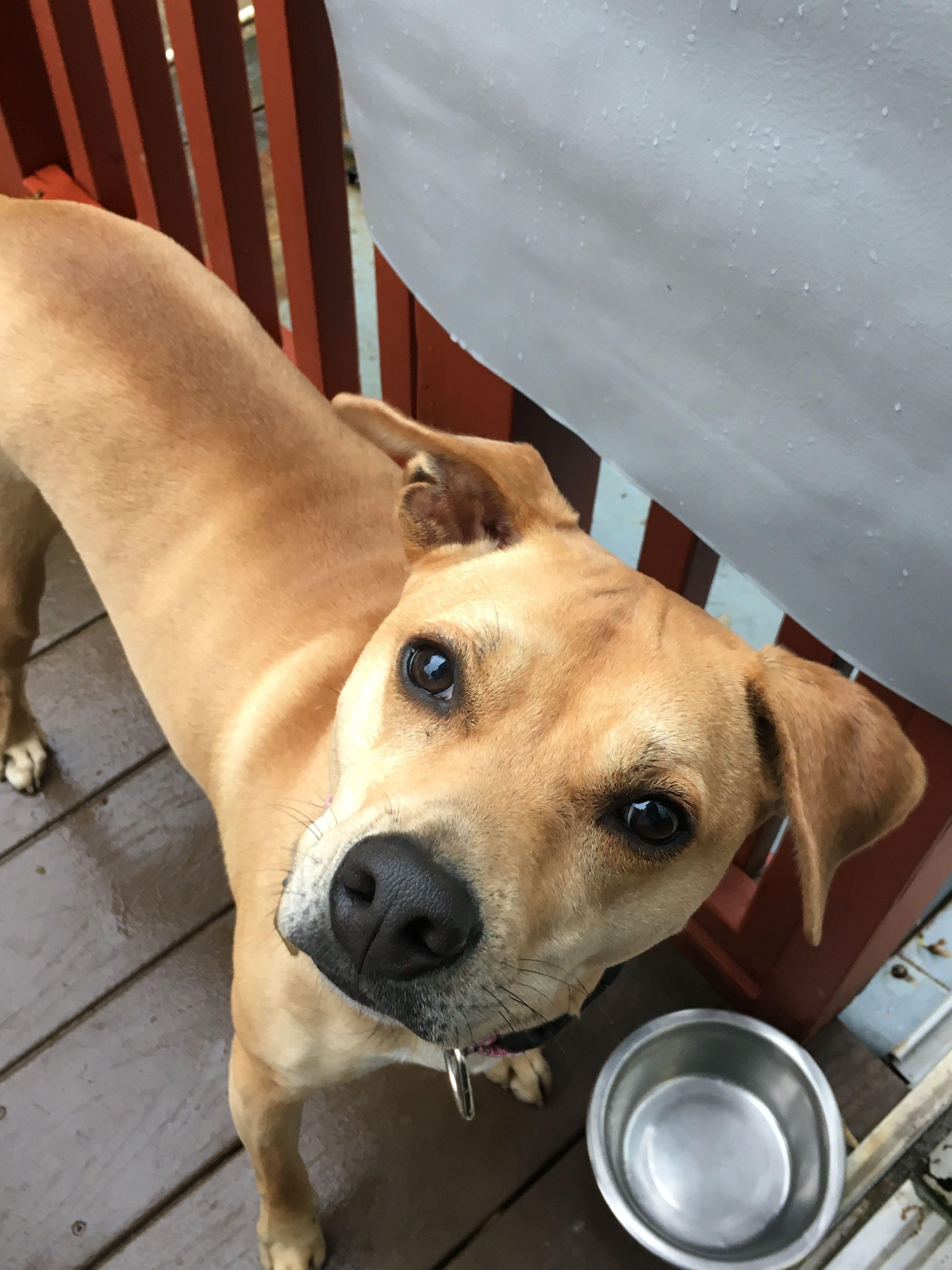 Adopt Chloe on Dog adoption, Help homeless pets, Terrier