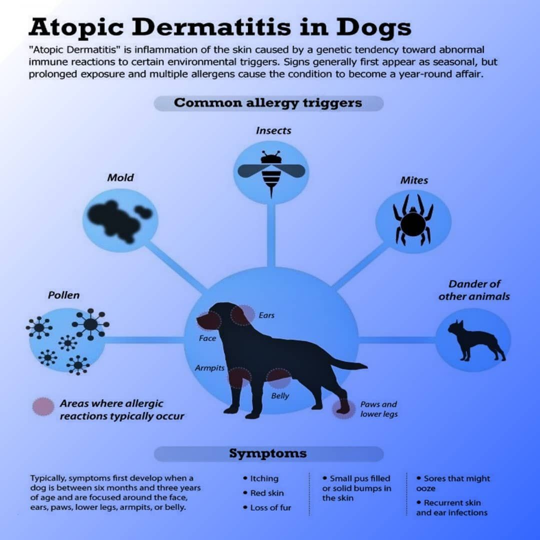 Digi Vets Atopic Dermatitis In Dog Credit To Respective Owners Follow Us For More Information About Veter In 2020 Atopic Dermatitis Vets Veterinary