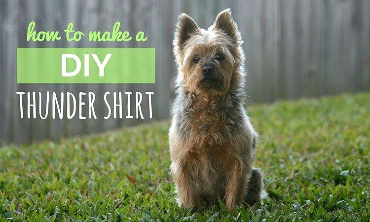 Diy thundershirt how to make your own canine anxiety wrap dog diy thundershirt solutioingenieria Images