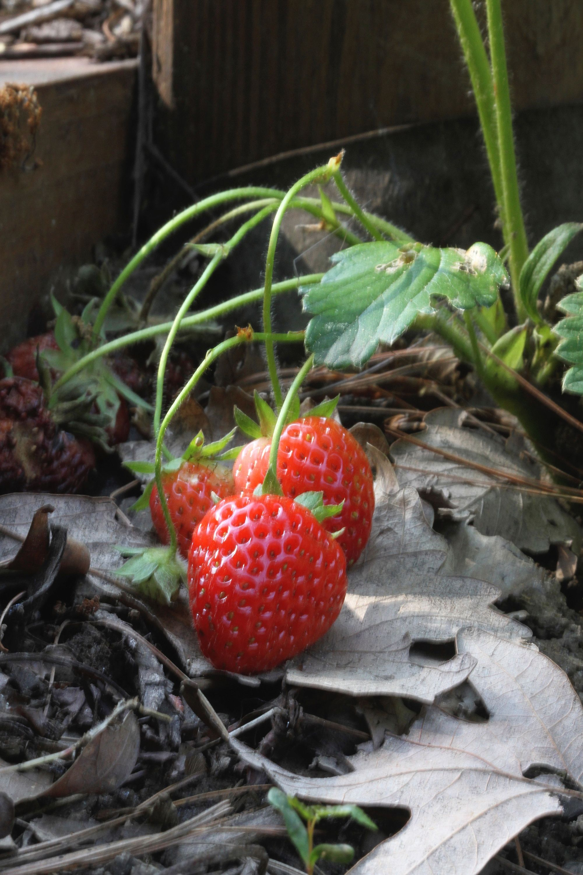 Why bother mowing thirsty lawns when you can grow edibles? Replace those sorry-looking patches of grass around trees, pathways and slopes with mint, thyme, strawberries, and a host of attractive and p