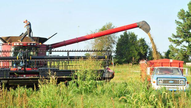 Beside a humming industrial combine, Crofton farmer Kendal