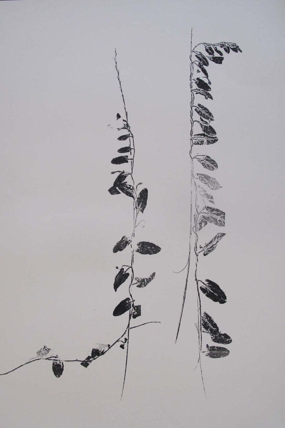Meadow Bindweed. A unique handmade 1/1 one of a kind original monoprint from Yorkshire flora.