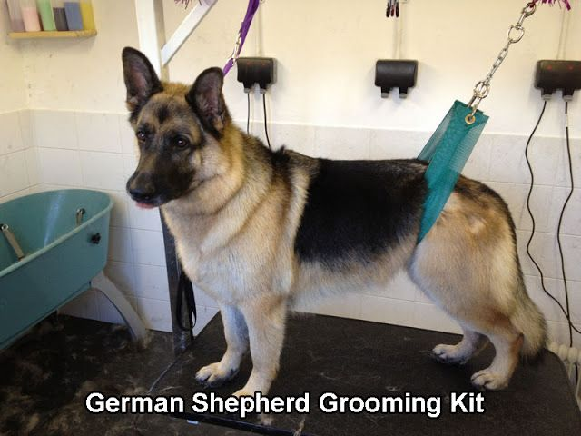 5 Training Tips For German Shepherd Puppies German Shepherd