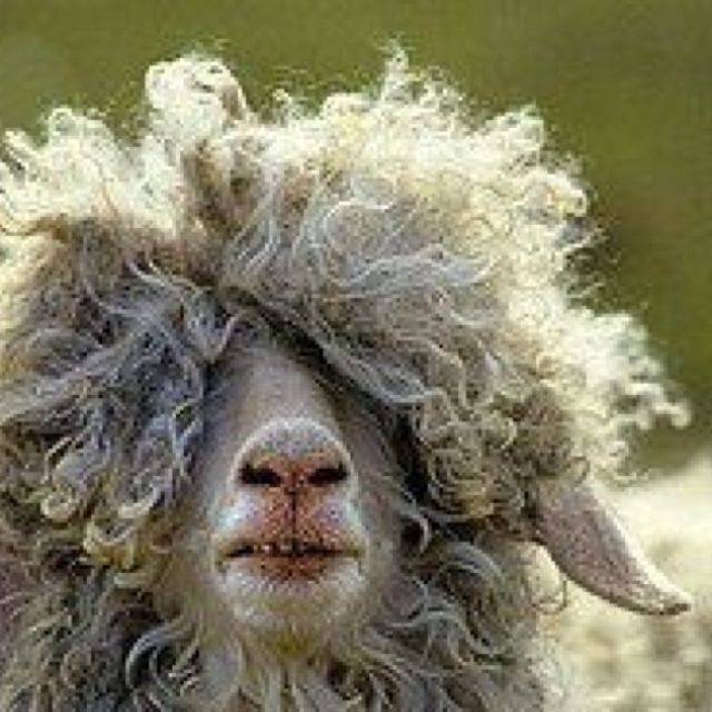 bad hair day animals curly