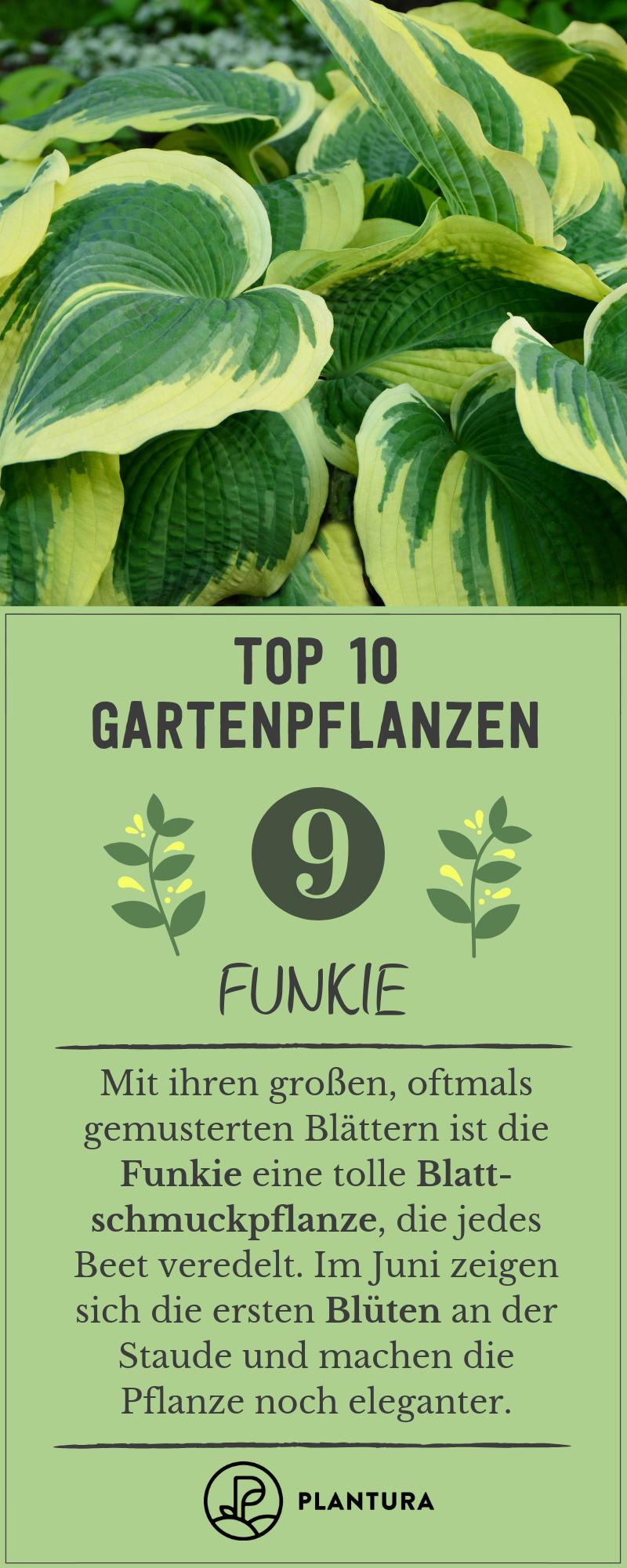 Gartenpflanzen Unsere Top 10 Für Ihren Garten Plantura Artikel
