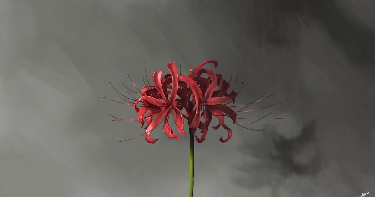 Pin By Salah Alameh On Anime In 2020 Lily Wallpaper Red Spider Lily Anime Backgrounds Wallpapers
