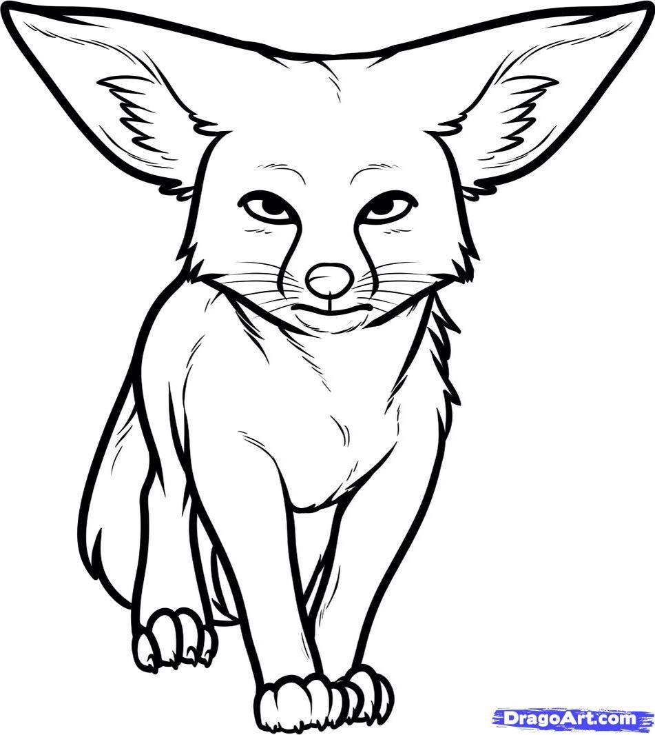 Pin On Fox Fennec Fox