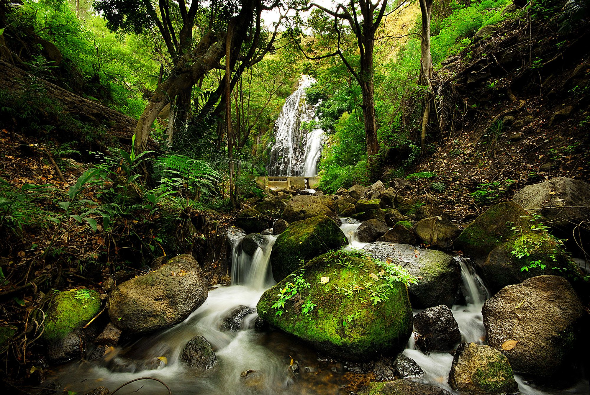 Peaceful Forest Waterfall Wall Mural & Photo Wallpaper