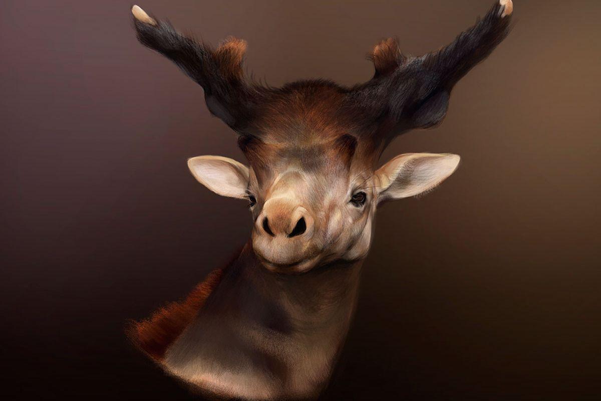 Sivatherum | Giraffidae, Giraffe neck, Giraffe