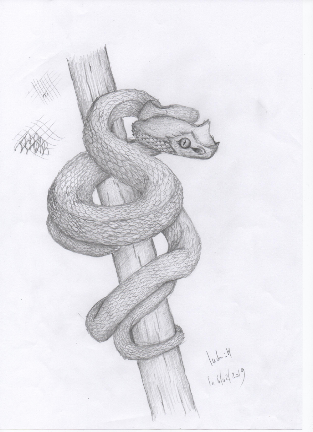 Comment Dessiner Un Serpent Dessin Serpent Dessin Comment Dessiner