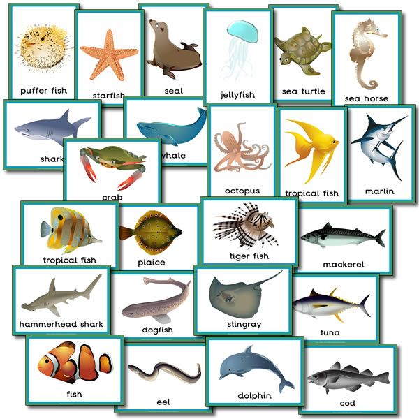 sea creatures poster -...
