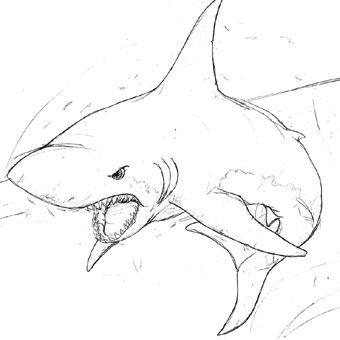 shark sketch - Google Search | A R T S P I R A T IO N | Pinterest ...