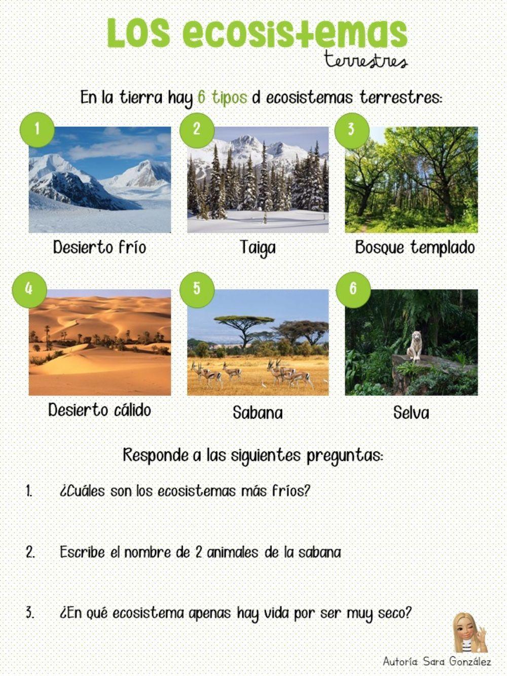 Ficha Online De Los Ecosistemas Para 5º Educación Primaria Puedes Hacer Los Ejercicios Online O Tipos De Ecosistemas Clasificacion De Seres Vivos Ecosistemas
